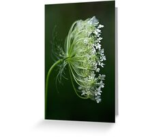 Profile of a Queen - Queen Anne's Lace Wildflower Greeting Card
