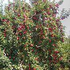 Bearing Apples by James Brotherton