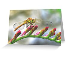 Today I saw the dragon-fly Greeting Card