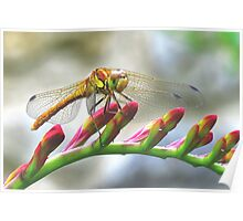 Today I saw the dragon-fly Poster