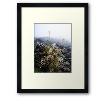 water condensation on a plant Framed Print