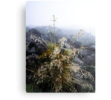 water condensation on a plant Metal Print