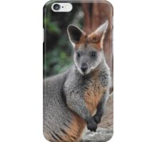 Red-necked wallaby iPhone Case/Skin
