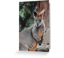 Red-necked wallaby Greeting Card