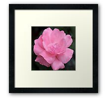In the Pink 2 Framed Print