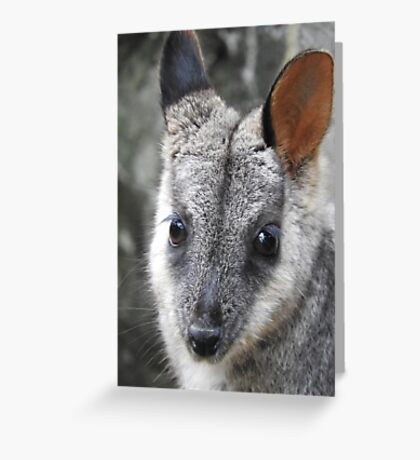 Rock Wallaby Greeting Card