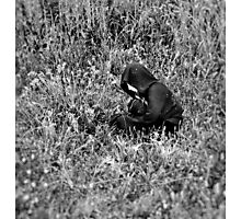 Girl in Nature Photographic Print