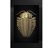 Fossil Record - Golden Trilobite on Black #1 Photographic Print