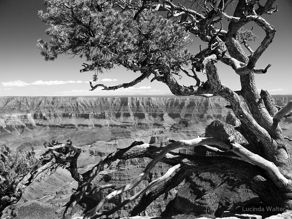 Tree Overlooking the Canyon by Lucinda Walter