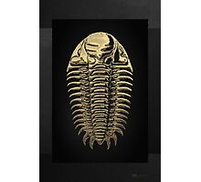 Fossil Record - Golden Trilobite on Black #3 Photographic Print