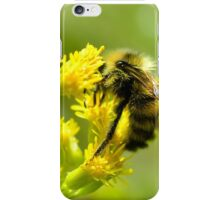 Hungry bee iPhone Case/Skin