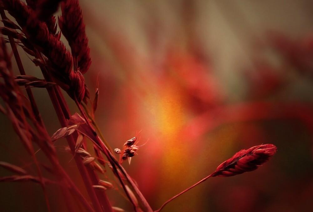 HOT SUMMER by leonie7