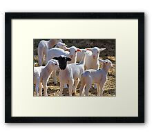 WHY AM I ALWAYS STARED AT ! Framed Print
