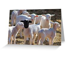 WHY AM I ALWAYS STARED AT ! Greeting Card
