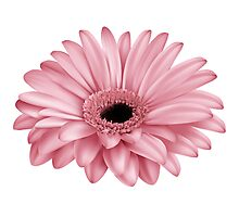 flower pink nature plant plants spring beauty Photographic Print