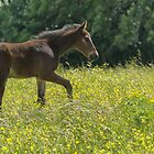 Little Colt by M.S. Photography & Art