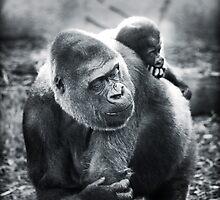 A Mothers Love by DuboisDigital
