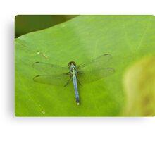 Dragonfly on lotus leaf Metal Print