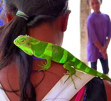 Melanesian girl with pet lizard (Iguana?). by ronsphotos