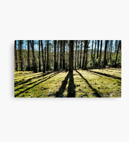 Forest Shadows Canvas Print