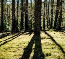 Forest Shadows Sticker