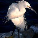 Snowy egret or heron by loiteke