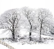 Three Snowy Tree's by Heidi Stewart