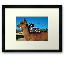 Sleeping Alpaca Gaucho Framed Print