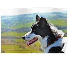 Border Collie on the Moors Poster