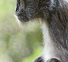 Silver Leaf Monkey Sticker