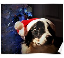 Border Collie Christmas Poster