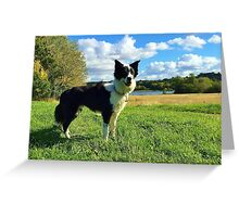 Border Collie in the Park Greeting Card