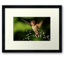 ..TINY BUBBLES....Rufous Hummingbird...by Marie Will Framed Print