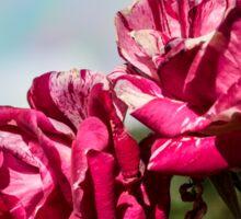 2 Variegated Roses Sticker