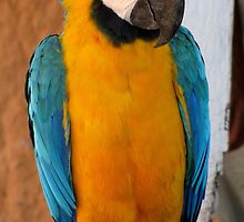 Curious macaw by hummingbirds