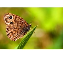 relaxing butterfly Photographic Print