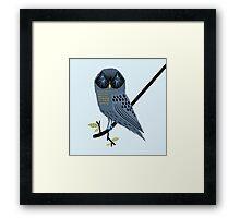 The Perching Owl Framed Print