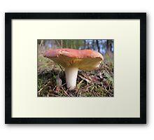 Phylloporus  Clelandii Framed Print