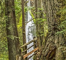Marymere Falls by Jim Stiles