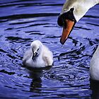 Swan and Cygnet by rosepetal2012