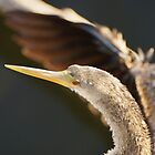 Anhinga Head turn by Scott Dovey