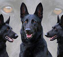 Black German Shepherd Collage by Sandy Keeton