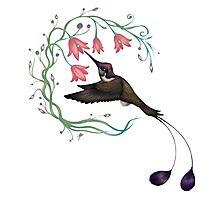 Hummingbird Coloured Version Photographic Print