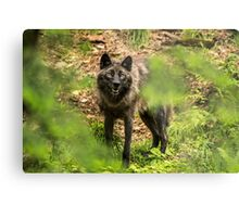 Black Wolf In Forest Metal Print