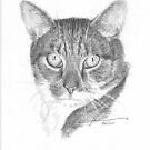 hector the cat drawing by Mike Theuer