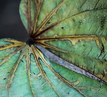 Library Leaf by Larry Costales