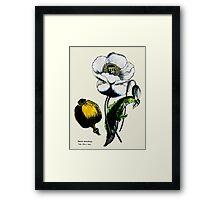Opium Framed Print