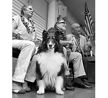 Dog on the campaign trail. Photographic Print