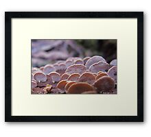 Little Ping-pong bat fungi Framed Print