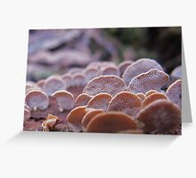 Little Ping-pong bat fungi Greeting Card